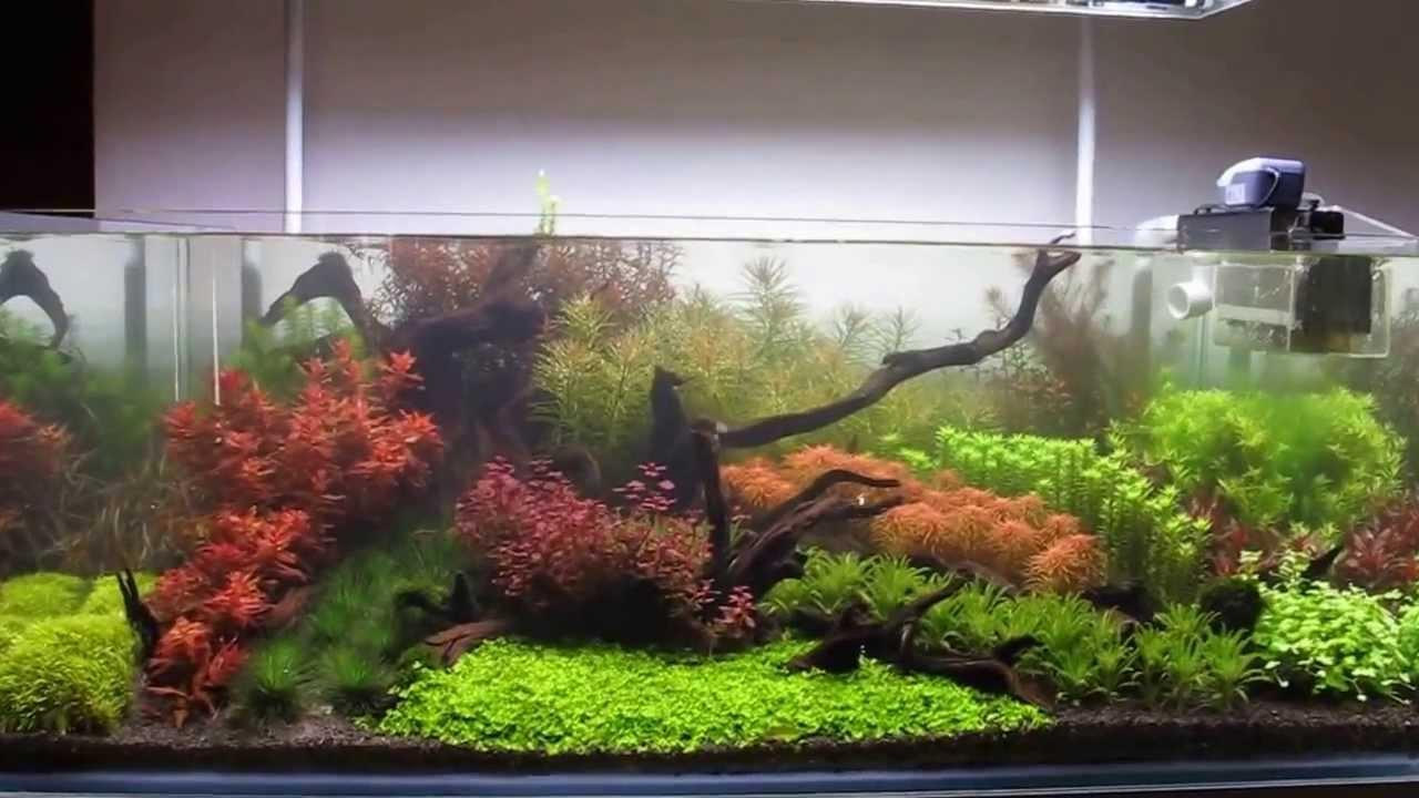 120 Gallon Dutch Hybrid Planted Aquarium Youtube