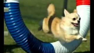 Gloucester Kennel Club Agility Trial, Sun 10 16 11 2