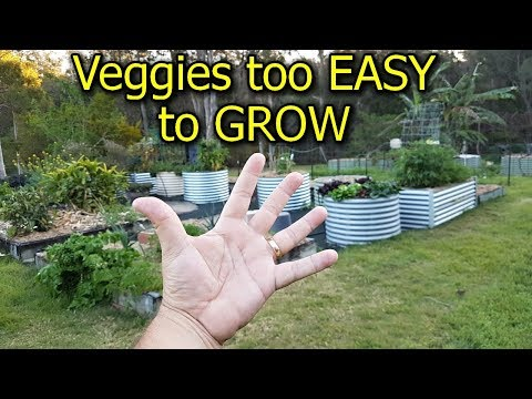 5 Vegetables that are too EASY to GROW in the Garden