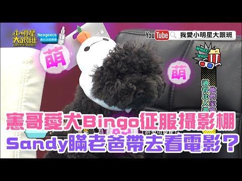 【超有梗】憲哥愛犬Bingo征服攝影棚 Sandy瞞老爸帶去看電影?
