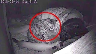 Парень установил камеру чтобы узнать что ночью делает его кошка