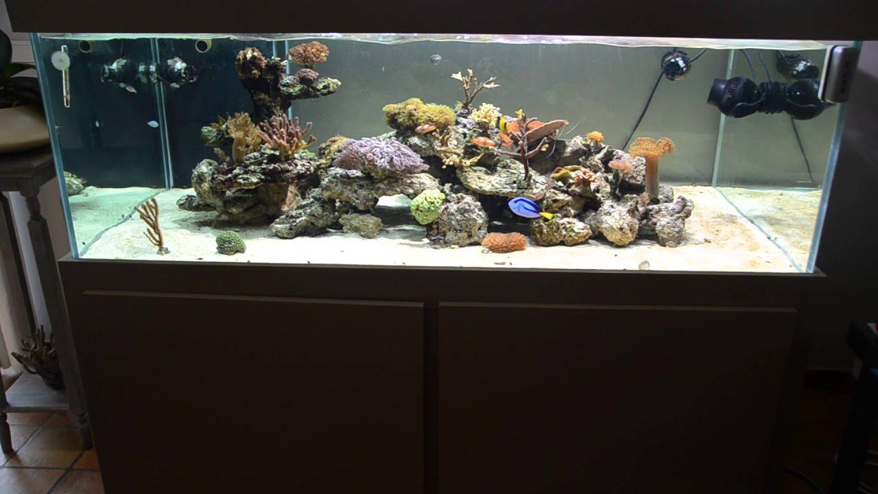 maxresdefault Frais De Aquarium Recifal Complet Concept