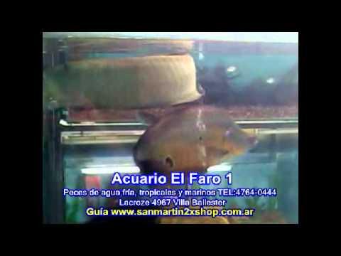 acuario en zona norte el faro 1 youtube ForAcuarios Zona Norte