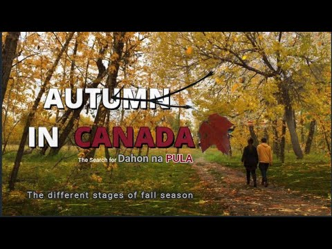 Fall - Autumn Season 2019 - Calgary Alberta Canada