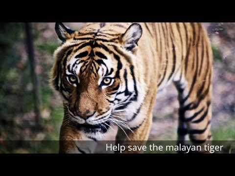 Malaysian Wildlife Volunteer