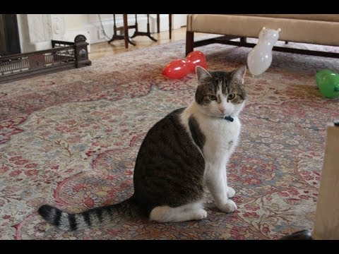 Larry the Downing Street cat - no comment