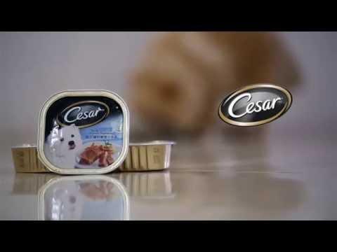 cesar-dog-food-commercial