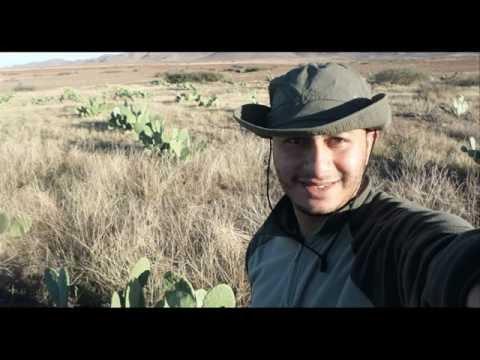 Cactus Farms in Morocco