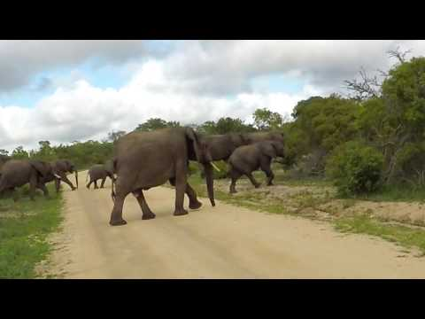 Henward and Karin Kruger National Park 2017