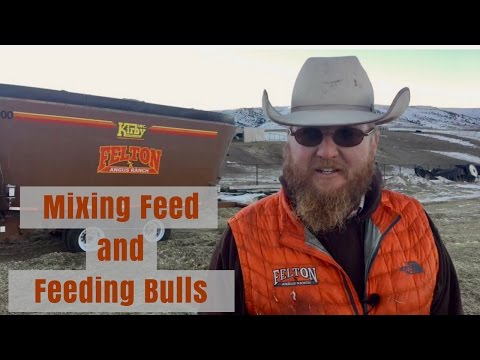 Mixing Feed and Feeding Bulls at Felton Angus Ranch