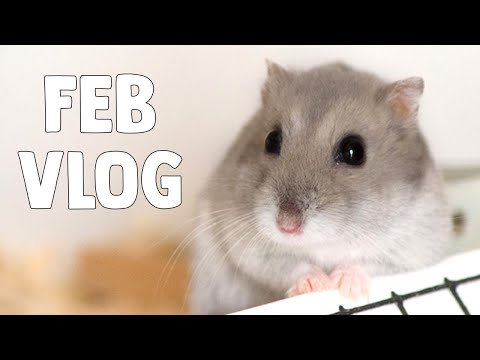 I'm Always Cleaning Pet Cages! | February '19 Vlog