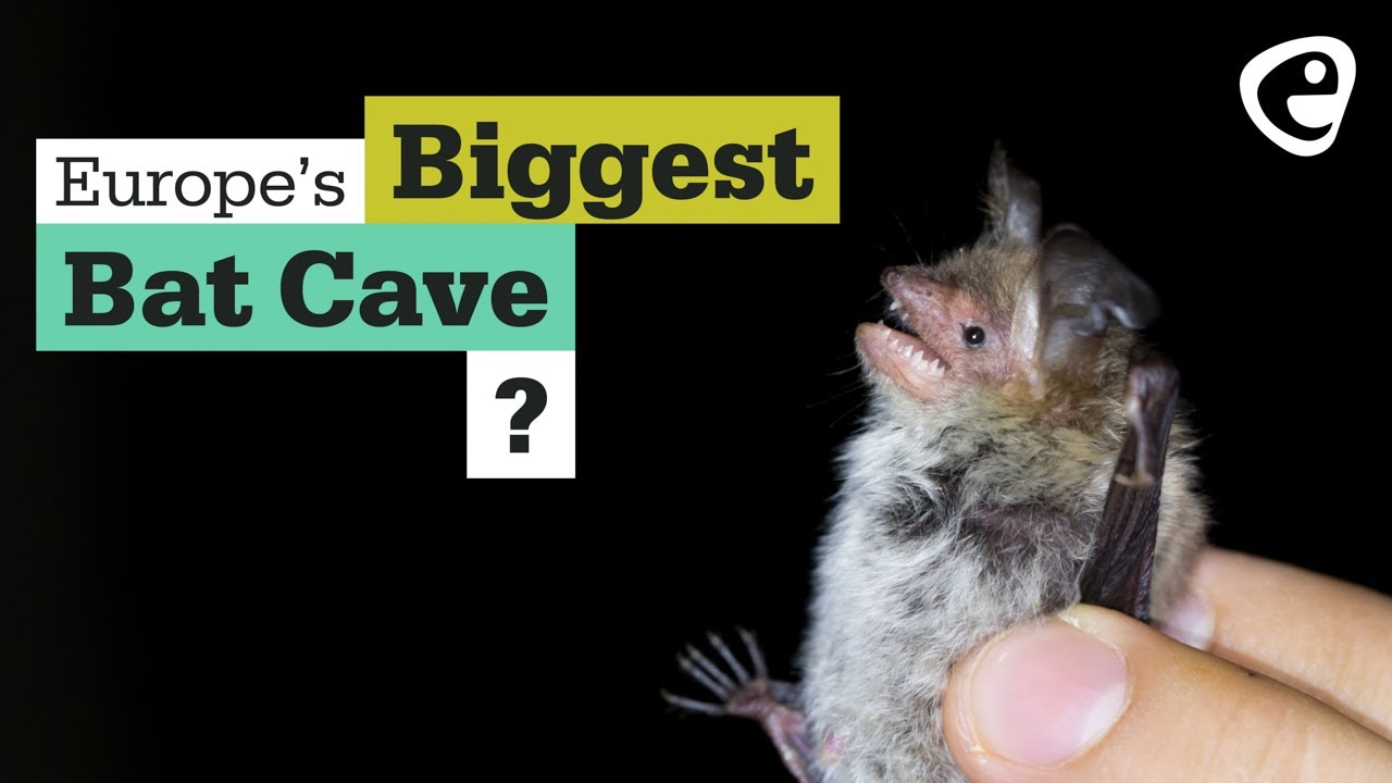The biggest bat cave in the EU?