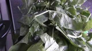 Простая заморозка зелени. Шпинат на зиму - отличный диетический продукт ч.2