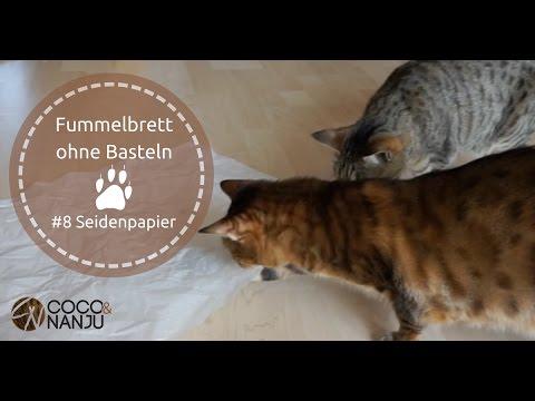 Seidenpapier Als Spannendes Fummelbrett Für Deine Katze Katzenspielzeug Selber Machen