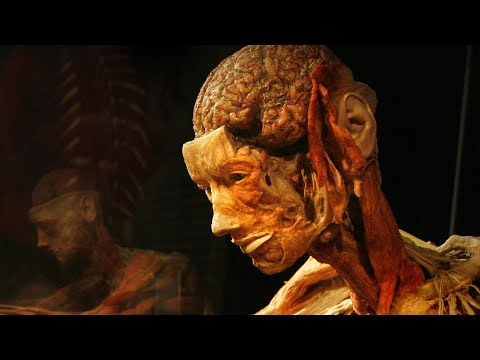 New human organ interstitium discovered; Can the human body handle long space journey - Compilation