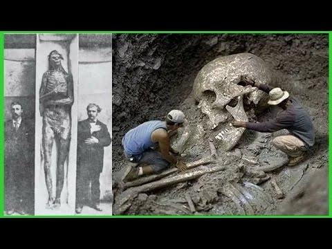 Grösste Menschliche Skelette Der Welt