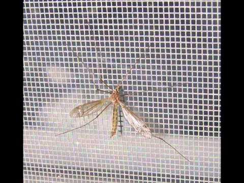 Ph 9486221124 Mosquito Net Mosquito Net For Windows Velcro