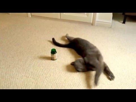 Cat gets high on Valerian Root (cat nip)