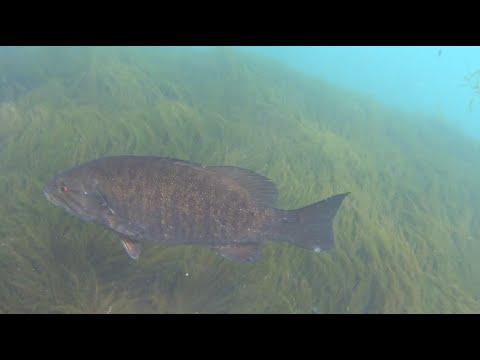 Niagara Power Authority Fishing Platform Underwater View