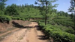 Дорога среди чайных плантаций. Индия. Анамалайские горы