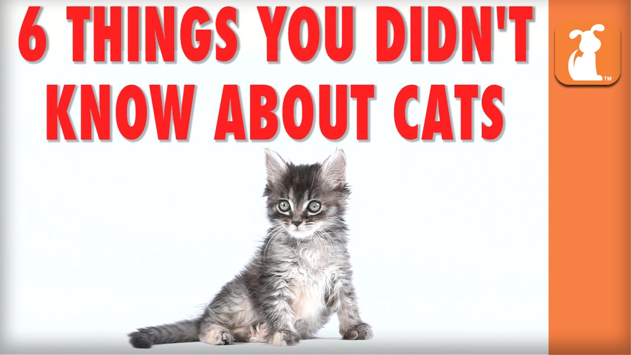 Things I Know About You: 6 Things You Didn't Know About Cats