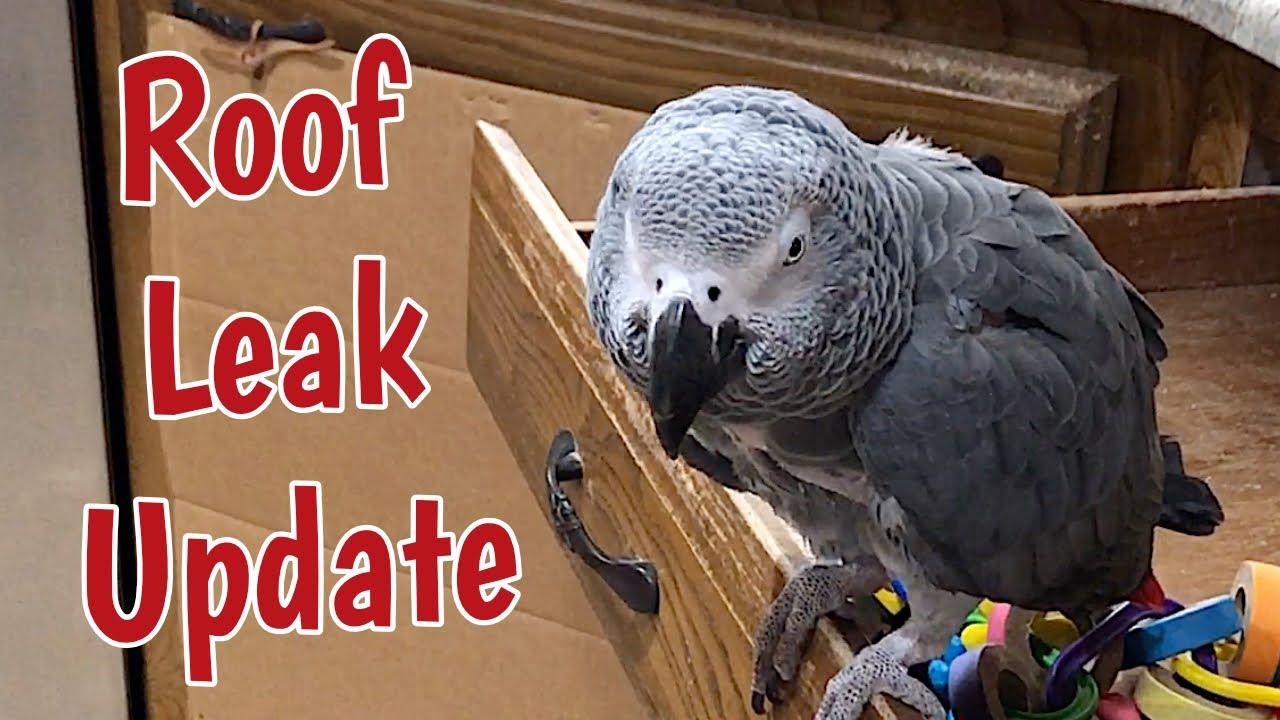 Roof Leak Update