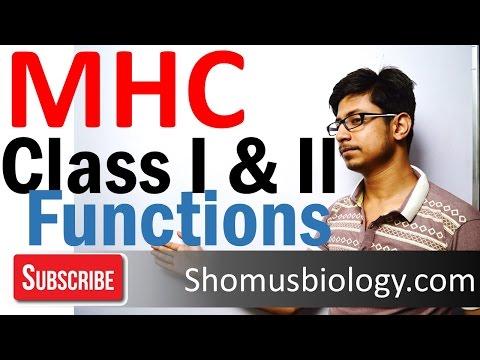 MHC class 1 and 2 | Major histocompatibility complex