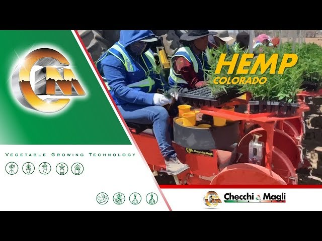 CHECCHI & MAGLI - TRIUM 6 ROWS COLORADO - HEMP TRANSPLANTING 2019