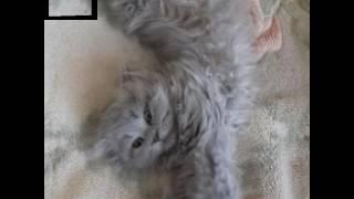 Фотографии моего котёнка.