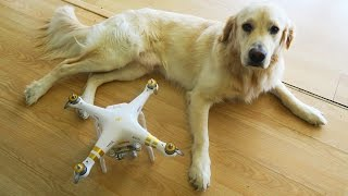 Video I Bought Cooper a Drone! (Super Cooper Sunday #48) download MP3, 3GP, MP4, WEBM, AVI, FLV Oktober 2017