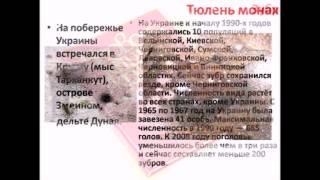 Красная книга Украины  Животные - Пермякова О