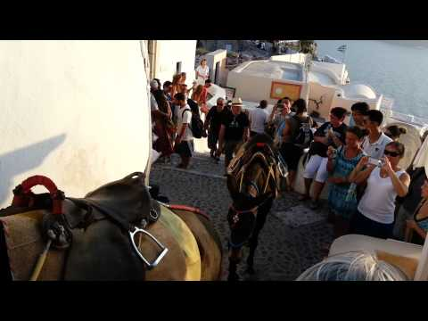 Donkeys in Oia, Santorini, Greece