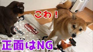 oniennaさんちの柴犬と 4匹の先住猫たちのゆっくり日常動画です! 先住...