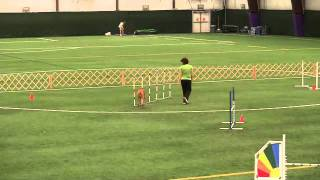 Bowie Agility - Novice Jww May 30, 2011