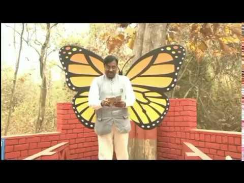 Erfly Garden In Chandrapur