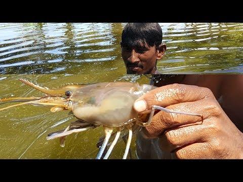 Big Net Fishing | Catching Shrimp & Carp Fish From Huge Canal | Village Fishing By Boys