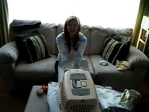 Puppy!  January 2009 001