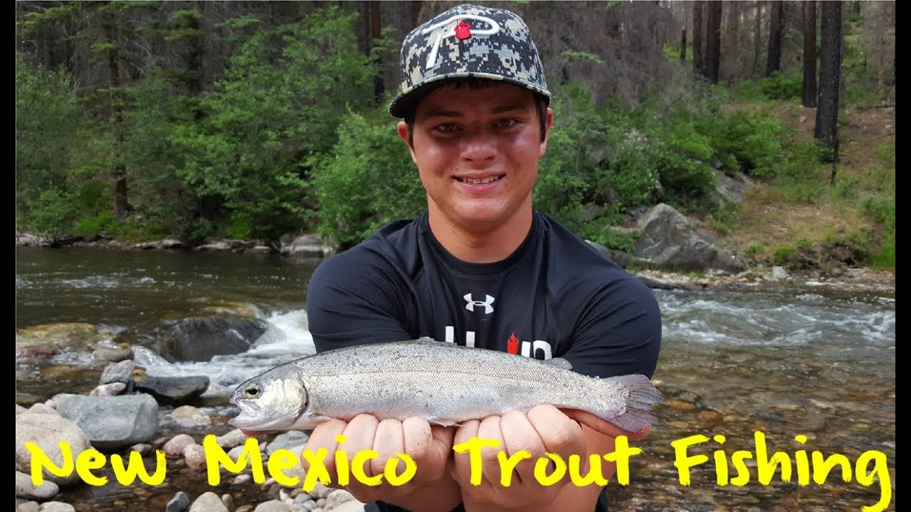 New Mexico Trout Fishing YouTube