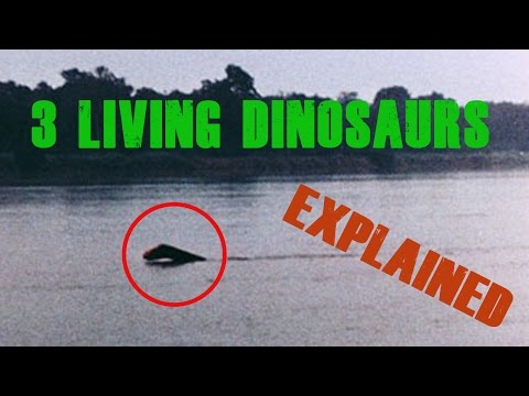 3 Living Dinosaurs Seen In Real Life (And Their Explanations)