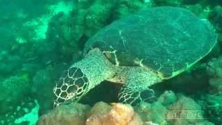 Science O.C.N. - Deep Water Ocean Lounge