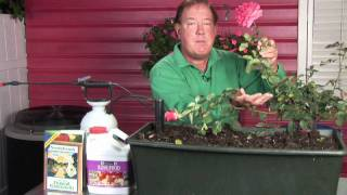 Growing Roses : How to Protect Your Roses Without Using Chemicals