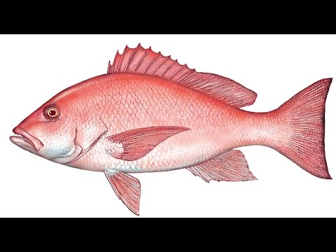 Fish eating guide low and high mercury levels youtube for Why do fish have mercury