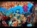 UNDERWATER - Red Sea Coral Reef Egypt - Makadi Bay