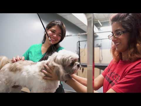 What to Look for in a Pet Daycare