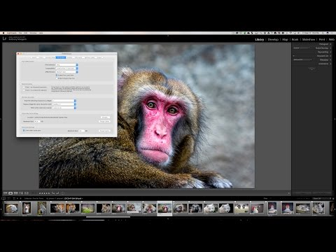 7 Tips for Making Lightroom Run Faster