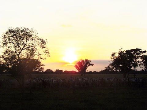Recorrido turístico por los Llanos Orientales (Meta - Colombia) - TvAgro por Juan Gonzalo Angel