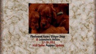 Fleetwood Farms Ginger Snap & Lohmann's Veltins - Three Week Update