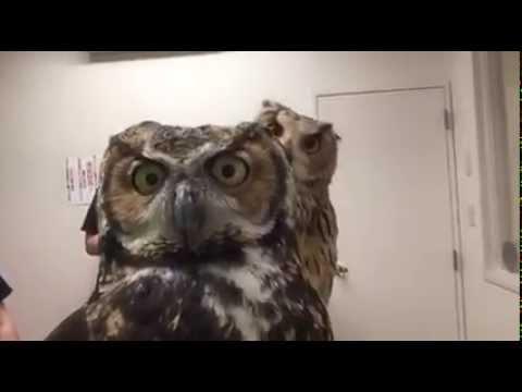 Owls Use Front-Facing Camera