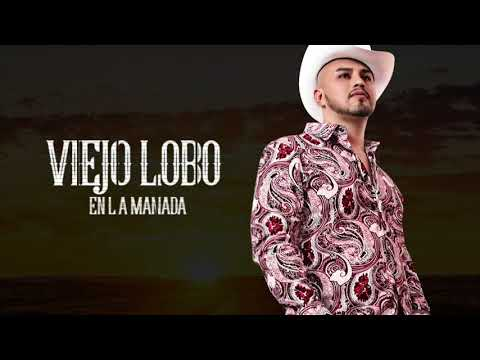 Viejo Lobo en La Manada/ Jessie Morales El Original De La Sierra