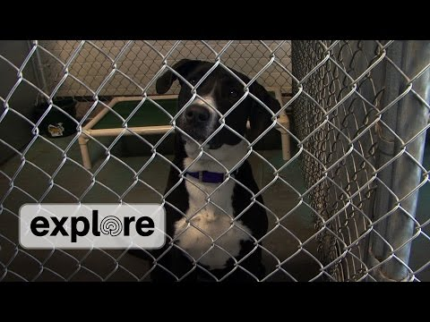 Wood River Valley Animal Shelter